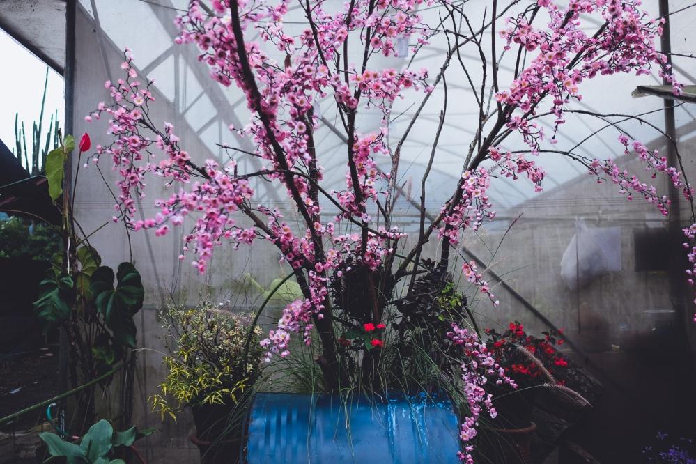 Begonia (6 of 9)
